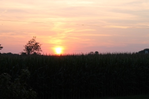 summer sunset 2014