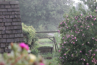 Summertimebackyard