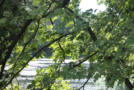 Trees at Lake with Sun