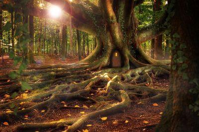 fantasy_treehouse